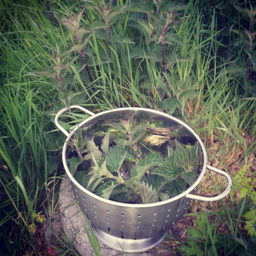 Nettle Picking